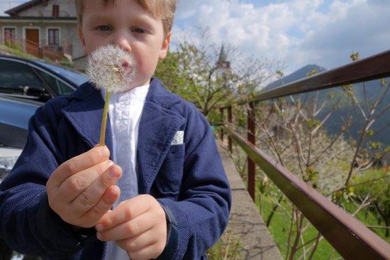 Ristorante Albergo Bellavista: Ostern endlich die ersten Pusteblumen im Garten