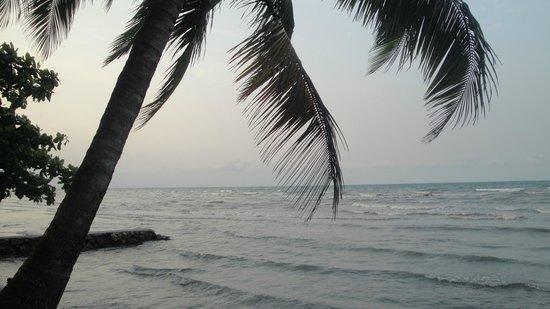 Dos Arboles: Playa del Hotel