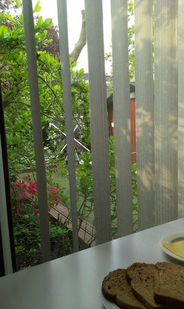Domstad: The garden you see from the kitchen
