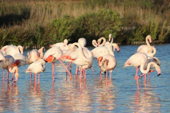 Le Parc Ornithologique de Pont de Gau : marais