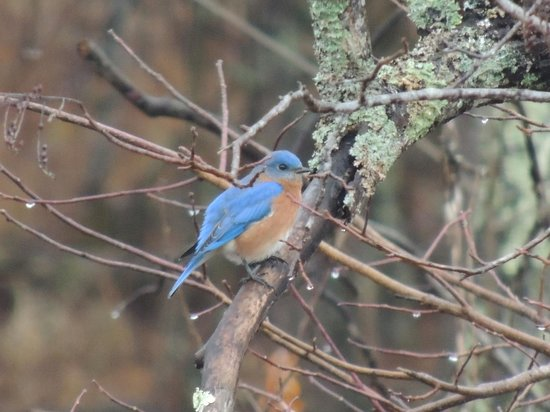 Stone Mountain State Park: Tons of birds