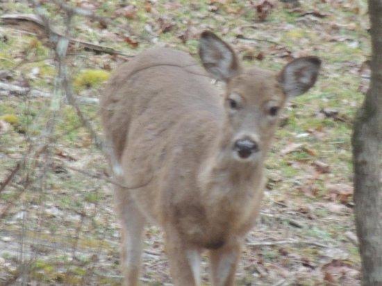 Stone Mountain State Park: Friendly little deer