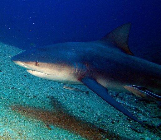 Playa Santa Lucia, Cuba: Shark 2