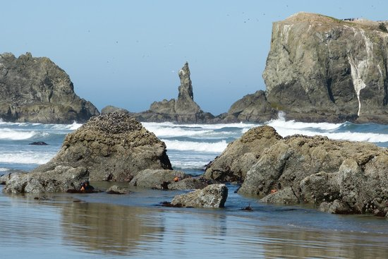Bandon Inn: Amazing coast line