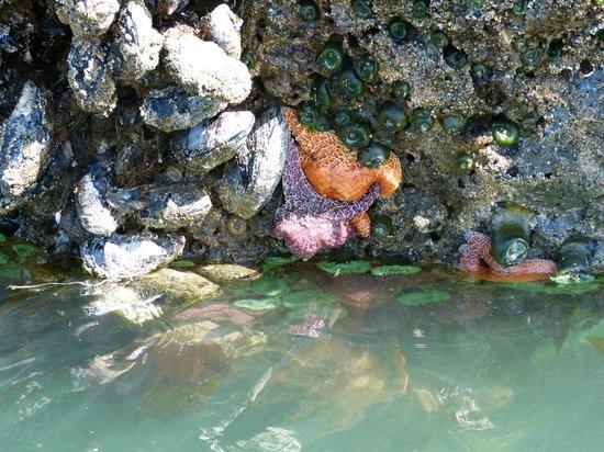 Bandon Inn: Best tide pool in Oregon