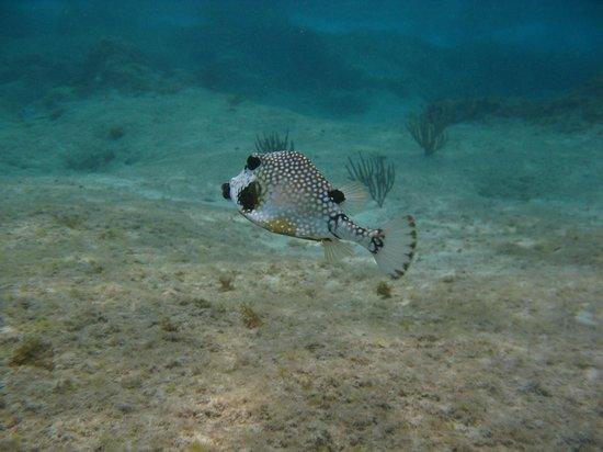 Sunscape Sabor Cozumel: One of many exotic fish we saw snorkeling