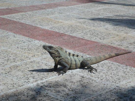 Grand Bahia Principe Coba: Iguana