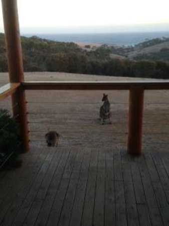 Lathami Lodge: View from the deck with the local wildlife.