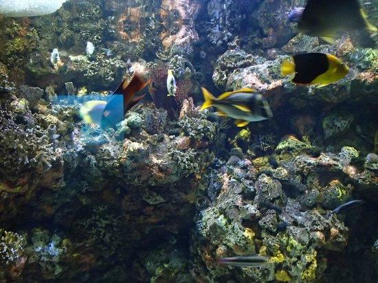 North Carolina Aquarium on Roanoke Island: fish