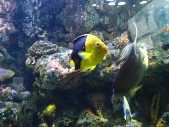North Carolina Aquarium on Roanoke Island: colorful