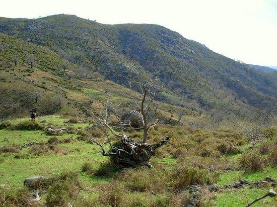 Albergue Aurora Boreal: Arbol Singular en la Sierra de Casas del MOnte