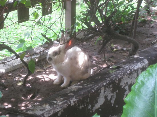 Singgasana Hotel Surabaya : yes, bunnies scattered through the grounds.