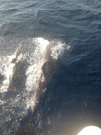 Good Times Catamaran Cruises : dolphins!