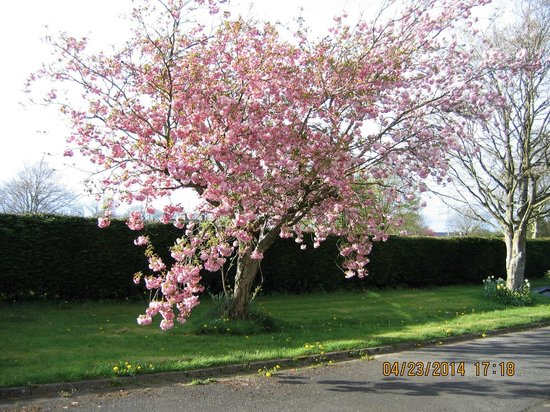 Birchwood B&B: Flowering Shrub
