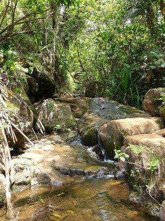 Kalalau Trail: Lush rain forest