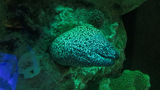 Interactive Aquarium : Up Close