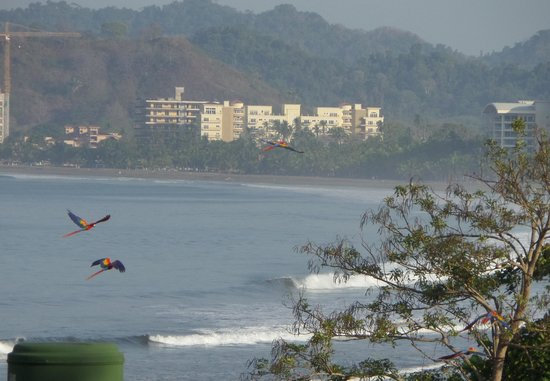 Hotel Club del Mar: macaws flying by our room, what a view.