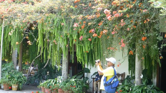 Museo Larco: great flora all about the place