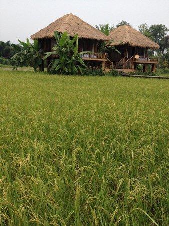 Vieng Tara Villa : Rice Villa