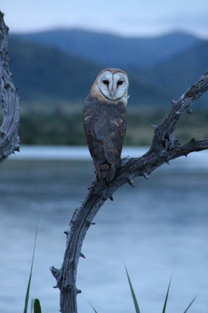 The Palace of the Lost City: Owl seen on hotel organized safari drive
