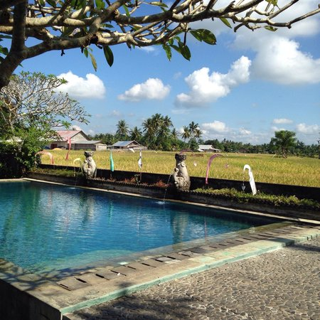 Mandala Desa: enjoy the peaceful moment at the pool with ricefield view.