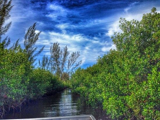 Everglades City Airboat Tours: view of the mangroves from the boat