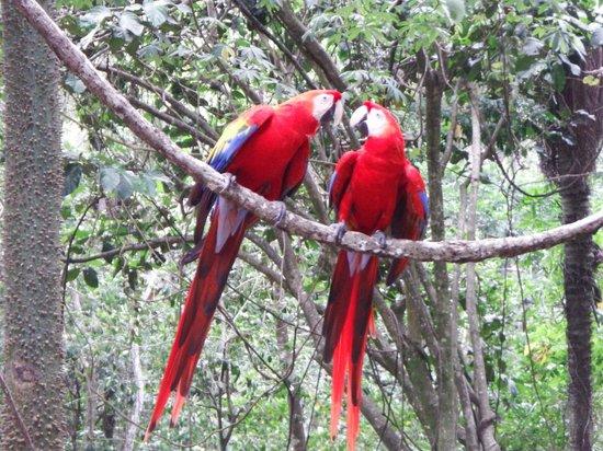 Gumbalimba Park : McCaw courting