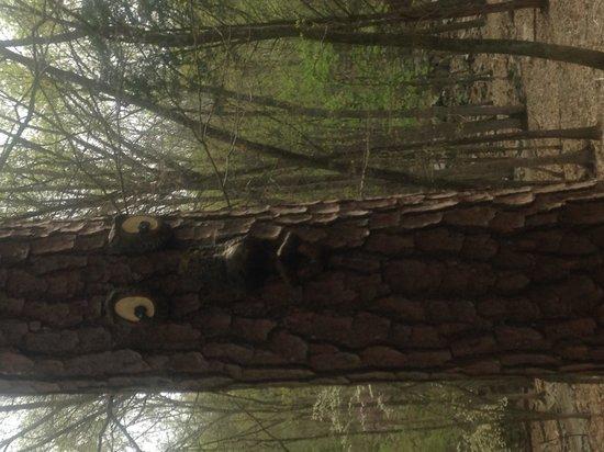 Harmony Park Safari: spooky tree