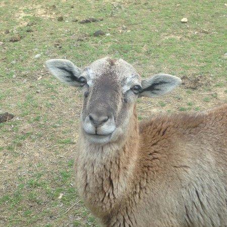 Harmony Park Safari: pretty eyes