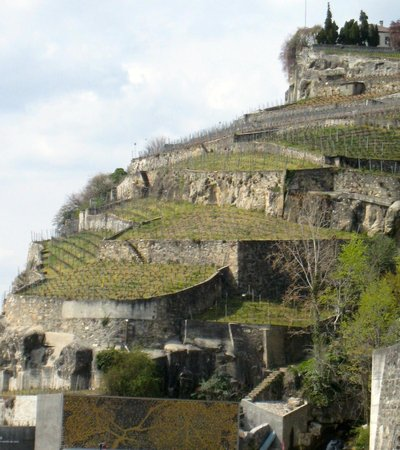 Domaine du Burignon : Terraces above the Vinorama