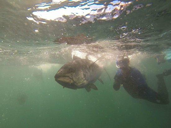 Swim with the Tuna: Wow