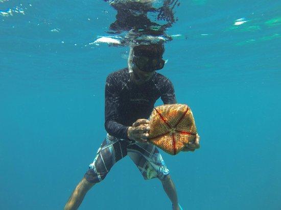 Guraidhoo Vacation Inn : Snorkeling