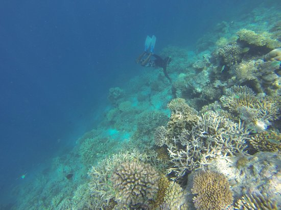 Guraidhoo Vacation Inn : Snorkeling Reef
