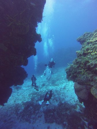 Challenge Diving: Diving at Palanacar Gardens