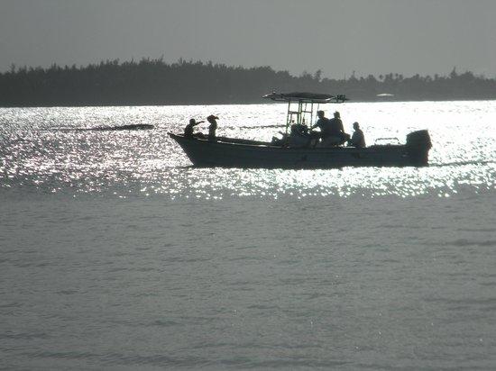Melia Coco Beach: Morning sailing