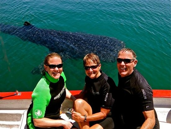 Hacienda Paraiso de La Paz Bed and Breakfast/Inn : Yes! Those Whale Sharks are HUGE!
