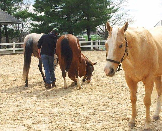 Schooling liberty horses at the Kentucky Horse Park