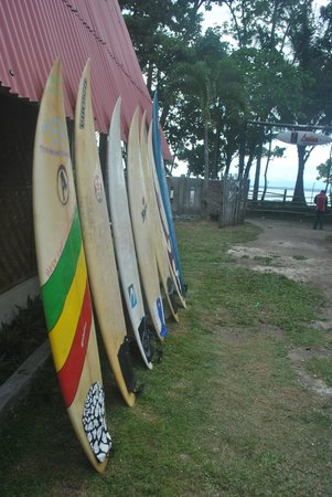 ‪‪Tanjung Setia‬, إندونيسيا: Surf Board at Lovina Surf Camp, Tanjung Setia‬