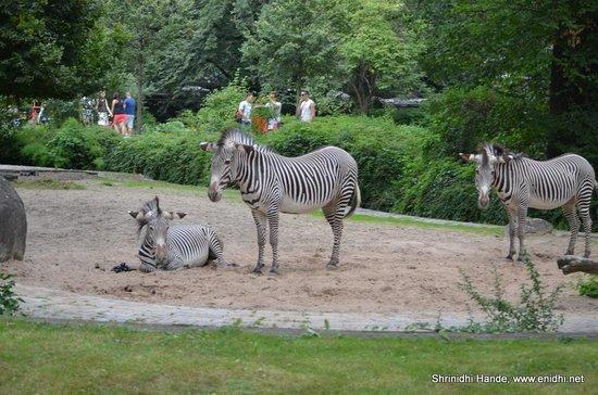 Zoologischer Garten (Berlin Zoo): Zeebras
