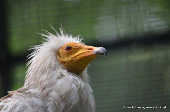Zoologischer Garten (Berlin Zoo): Bird