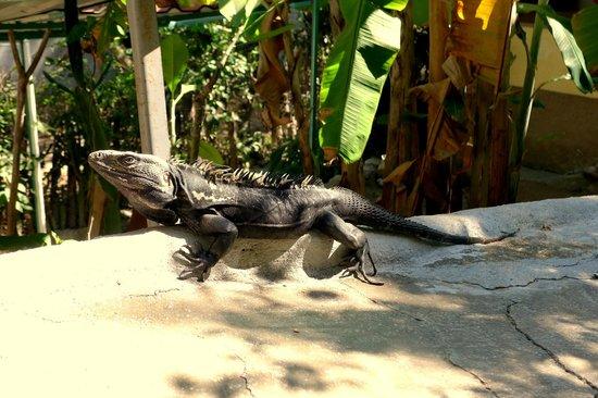 Posada las Mazuntinas: Local resident fauna