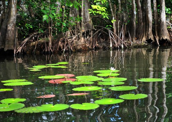 Go With Gus Tours : lily ponds