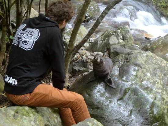 Ohau Stream Walk : Guy being real close to a seal pup