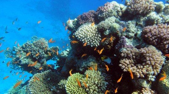 Faraana Reef Resort : море