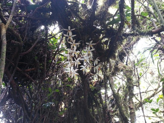 Mossy Forest: Wild orchids. .