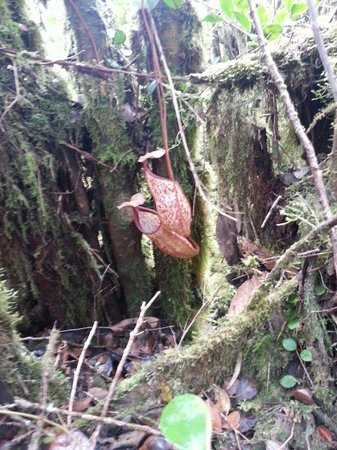 Mossy Forest: Carnivore...