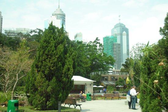 Garden View Hong Kong: Botanical garden