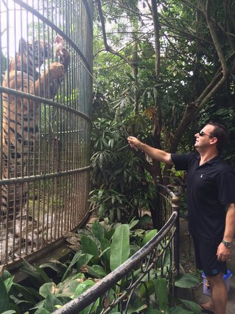 Bali Zoo: Feeding the tiger