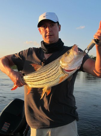 Shackletons: 4.7kg Tiger Fish on drift bait.