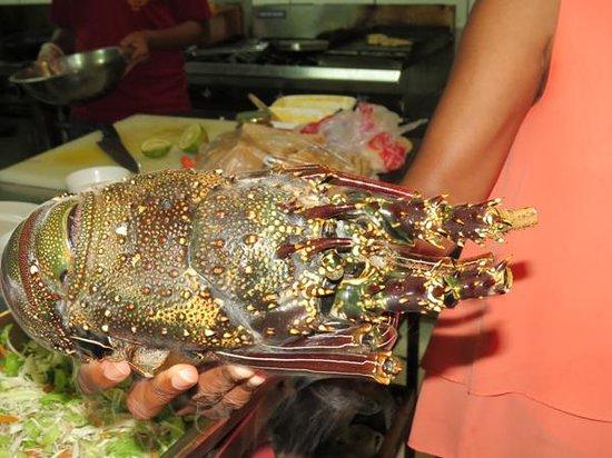 Ratu Kini's Backpackers and Dive Resort: Choosing a Lobster at Ratu Kinis